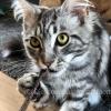 Matatabi Silvervine Catnip kattenstokjes Japan speelgoed katten goedkoop online kopen