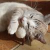 Speelgoed kat dierenarts oud en nieuw stress andere kat in huis plassen feromonen
