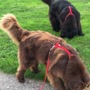 Beste anti-trektuig grote sterke hond hondentuig harnas tuigje voor hond Y-tuig New Foundlander Berner Sennen Landseer