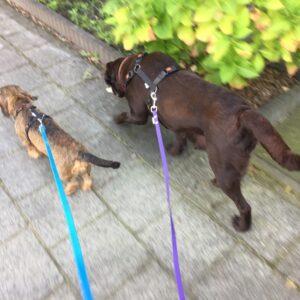 Lange 3 meter 3m biothane hondenriem riem leiband lijn hond uitlaten speurlijn goedkoop online bestellen paars lichtblauw