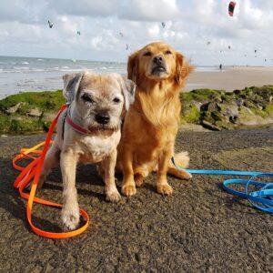 Lange 3 meter 3m biothane hondenriem riem leiband lijn hond uitlaten speurlijn speuren goedkoop online bestellen blauw oranje
