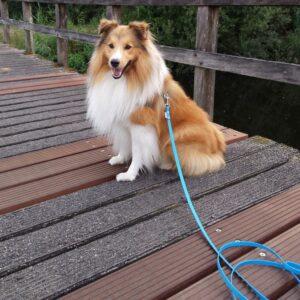 Lange 3 meter 3m biothane hondenriem riem leiband lijn hond uitlaten speurlijn speuren goedkoop online bestellen licht blauw