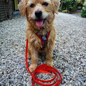 Lange 3 meter 3m biothane hondenriem riem leiband lijn hond uitlaten speurlijn speuren goedkoop online bestellen rood