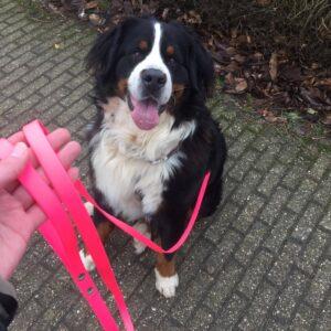 Lange 3 meter 3m biothane hondenriem riem leiband lijn hond uitlaten speurlijn speuren goedkoop online bestellen roze