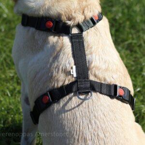 Verstelbaar Y-tuigje puppy meegroei tuig hondenharnas harnas hond Y-vorm sluitingen bij de hals niet over hoofd