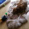 Heerlijk groot zacht mouflon schapenvacht voor de hond