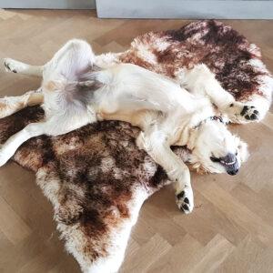 Moeflon Mouflon vacht schapenvacht voor de hond en hondenmand online bestellen aanbieding