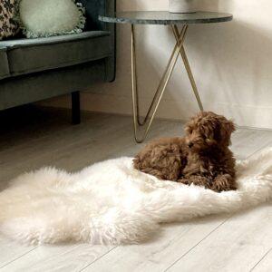 Mouflon Moeflon schapenvacht hondenmand hond puppy Sheepskin dog aanbieding vacht schaap wit doodle2