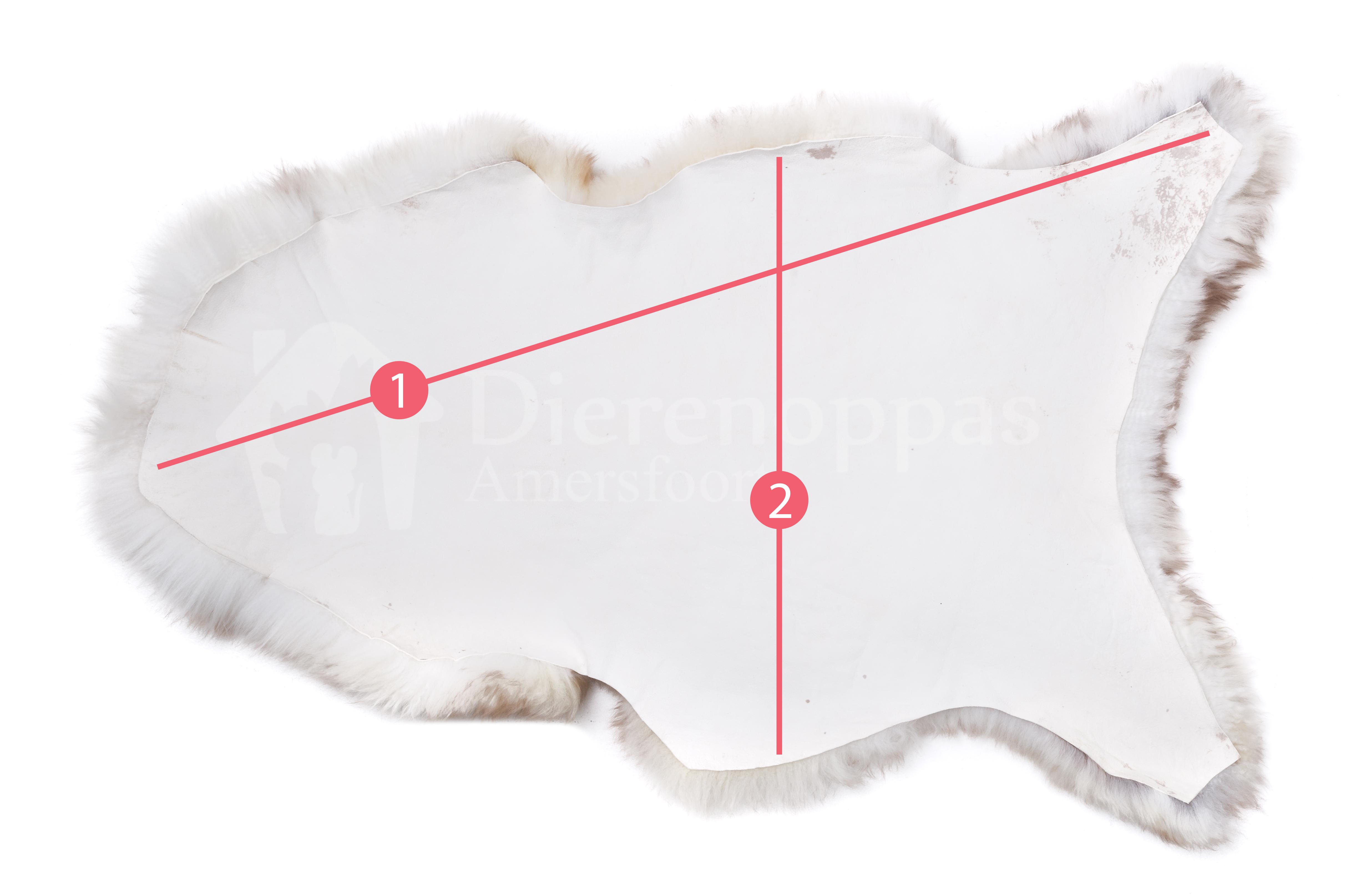 Mouflon schapenvacht hond hondenmand meten