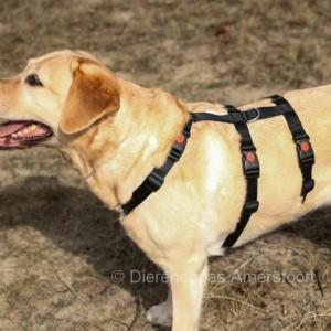 Anti ontsnap tuig veiligheidstuig hond podenco westpointer driepuntstuig anti-ontsnappingstuig escape-proof no escape