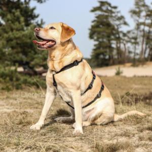 Anti ontsnap veiligheidstuig hond podenco galgo westpointer driepuntstuig anti-ontsnappingstuig escape-proof no escape