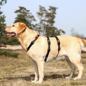 Anti ontsnap veiligheidstuig hond podenco galgo westpointer driepuntstuig anti-ontsnappingstuig escape-proof no escape pup