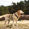 Anti-ontsnappingstuig anti-ontsnaptuig hond