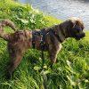 Anti-ontsnappingstuig anti-ontsnaptuig hond Dierenoppas Amersfoort