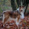 Ontsnappingstuig ontsnappen tuigje hond buitenland