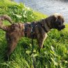 Tuig voor angstige hond anti-ontsnappingstuig