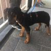 Tuig voor bange angstige hond waar ze niet uitkomen hondentuig