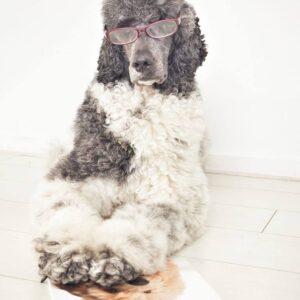 Boek Puppywijs puppy pup opvoeden trainen training labradoodle
