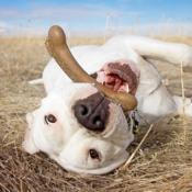 Boomschors bot hond sterke kauwer nylonbot nylonbone