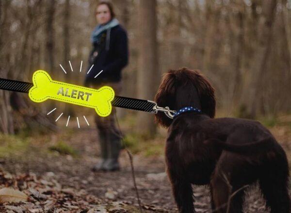 Yellow Alert Bone gele strik botje hond afstand