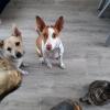 Zalmbot zalmhuid hond kauwbot hypoallergeen allergie