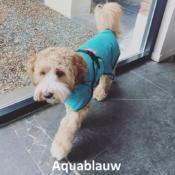 Badjas hond doodle labradoodle hondenbadjas aanbieding goedkoop chillcoat superfurdogs