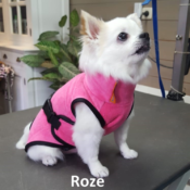 Badjas hond klein hondje chihuahua hondenbadjas aanbieding goedkoop