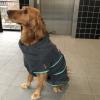 Badjas voor hond trimsalon golden retriever