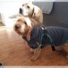 Badjas voor kleine en grote honden