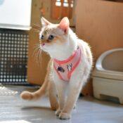 Catspia tuigjes voor katten hoge kwaliteit