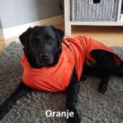 Oranje chillcoat hondenbadjas honden badjas hond labrador