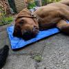 Koelmat koel mat hond goedkope beste stevige koelmat online bestellen