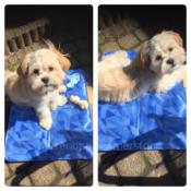 Koelmat koel mat hond honden aanbieding goedkoop beste koelmat online bestellen lidl aldi action