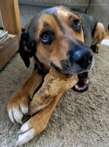 Kauw wortel koffiewoods coffeewoods hard bot kluif hond van hout houten honden