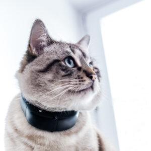 Tractive GPS tracker systeem voor katten