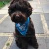 Goedkope beste koelbandana koel halsband koelhalsband hond honden zomer warmte hittegolf oververhitting online bestellen