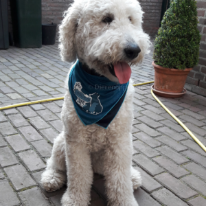 Goedkope beste koel halsband bandana koelhalsband hond honden zomer warmte hittegolf oververhitting online bestellen