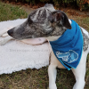 Goedkope beste koelbandana koel halsband koelhalsbandhond honden zomer warmte hittegolf oververhitting online bestellen