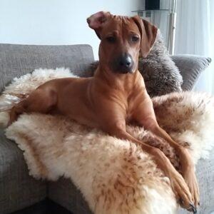 Mag een hond op bed of bank