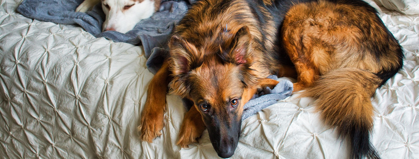 Maar dat hoort toch zo? – Slaapbehoefte & Slaapplaats van de hond