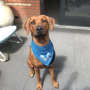 Verkoelende Bandana koelhalsband voor honden halsband koud oververhitting