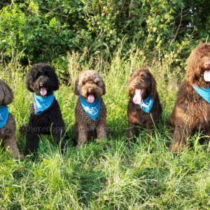 Verkoelende Bandana koelhalsband voor honden halsband koud oververhitting labradoodle