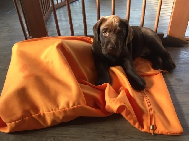 Labrador puppy bovenop de washbag tegen hondenhaar in de wasmachine en was