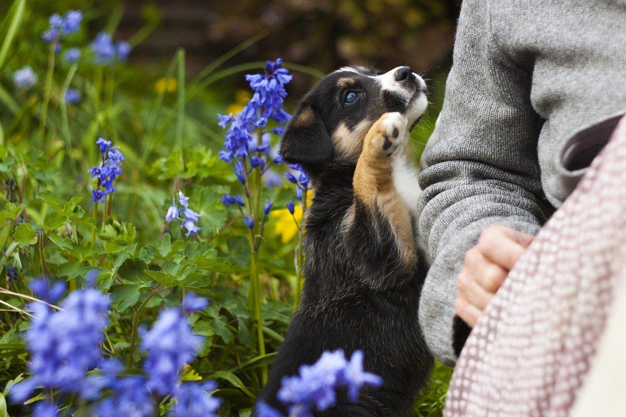 Puppy hond laten huilen janken blaffen piepen in bench eerste nacht