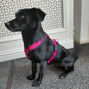 AnnyX Anny-X gevoerd Y-tuig hondentuig puppy tuigje buitenlandse hond