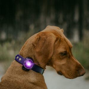 Orbiloc lichtgevende halsband veilig wandelen hond in donker oplaadbaar lichtje lampje honden lidl action