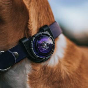 Orbiloc veiligheidslampje LED lampje oplaadbaar hond hondenriem halsband tuigje knipperlicht hondenlampje6