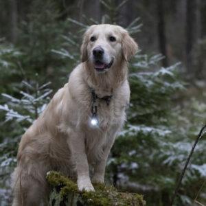 Orbiloc veiligheidslampje LED lampje oplaadbaar hond hondenriem lichtgevende halsband tuigje hondenlampje donker