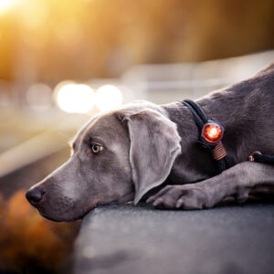 Orbiloc veiligheidslampje LED lampje oplaadbaar hond hondenriem lichtgevende halsband tuigje hondenlampje2