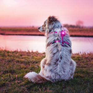 Orbiloc veiligheidslampje LED lichtje oplaadbaar hond lichtgevende halsband hondentuig donker action